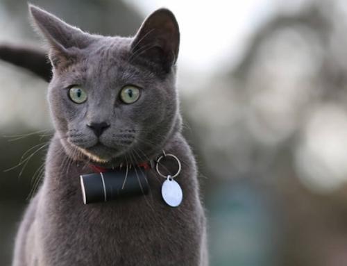 Choisir le meilleur collier GPS pour chat : Comparatif et Avis