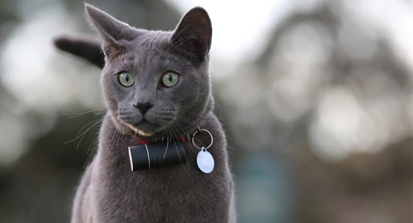 collier gps pour chat avis