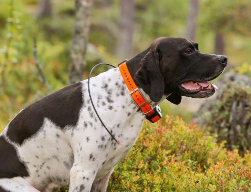 Choisir le meilleur collier GPS pour chien : Comparatif et Avis